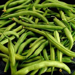 SNAP BEANS GREEN FRESH