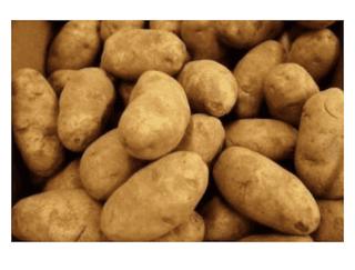 Potatoes Russet Fresh Produce