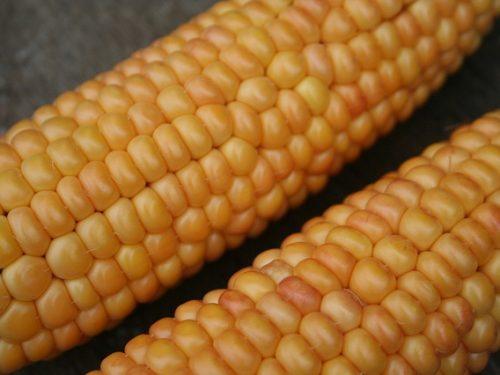 delicious corn in the cob