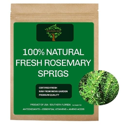 Fresh Rosemary Sprigs for Wedding Herbs Tea Food Oil