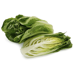 Organic Romaine Lettuce