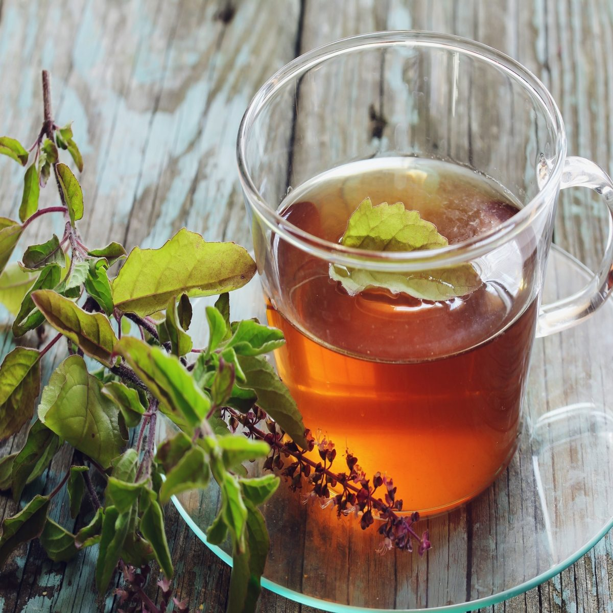 Tulsi Tea (Holy Basil Tea): Benefits, Side Effects, & Recipe