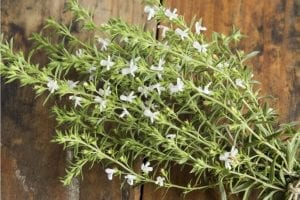 What Is Savory: All About the Savory Herb and 4 Related Recipes
