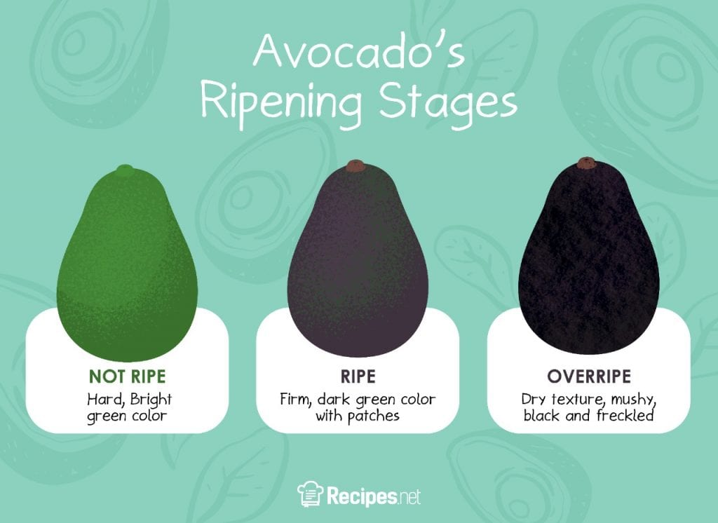avocado ripening stages