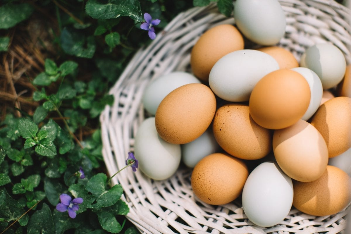 Are Eggs Dairy? NO. And Here's Why