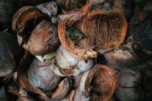 coconut husk without fruit, removed coconut husk