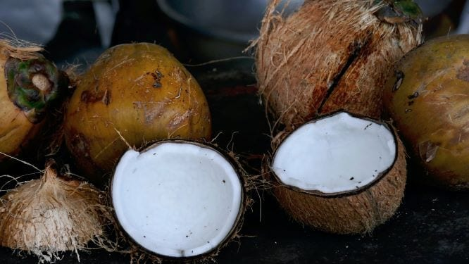 How To Open A Coconut In 4 Simple Steps
