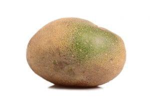 Raw unpeeled potato with green tinge on skin