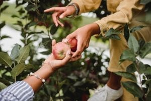hands holding fruits