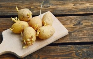 potatoes with sprouts on a chopping board