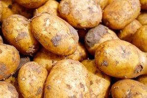 raw unwashed fresh potatoes