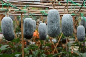 Winter Melon (Ash Gourd): What Is It and Exciting Ways to Cook It
