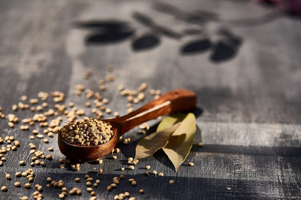 what are coriander seeds