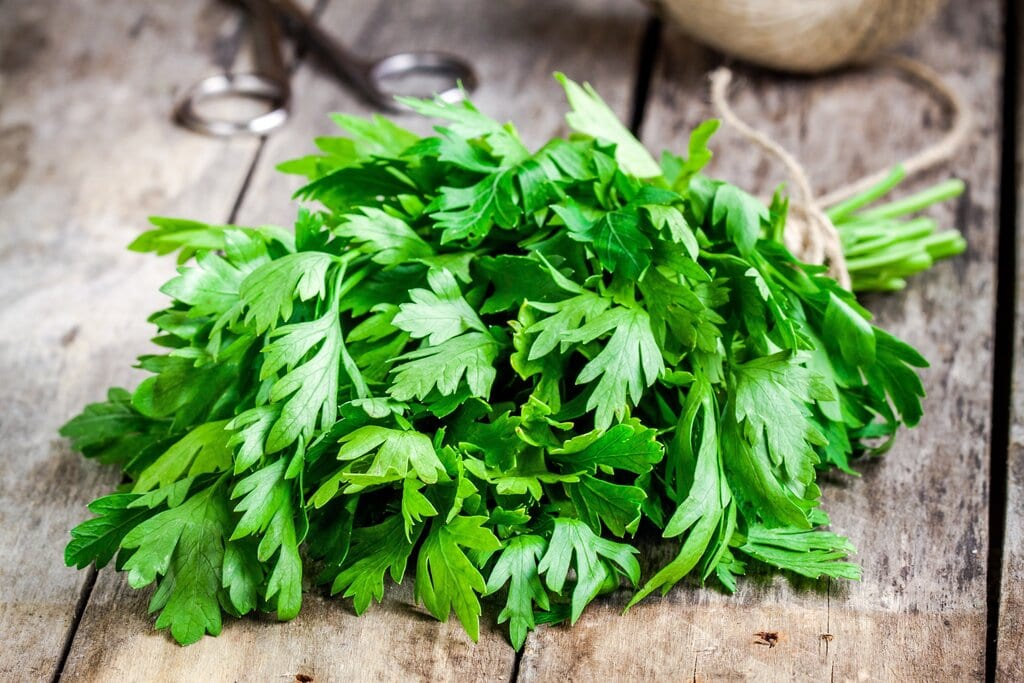 Parsley vs Cilantro: 4 Main Differences You Should Know