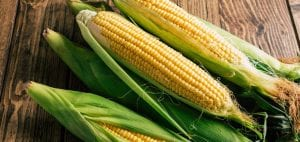 How to Store Corn on the Cob: 4 Sure Methods to Store and Pick Corn