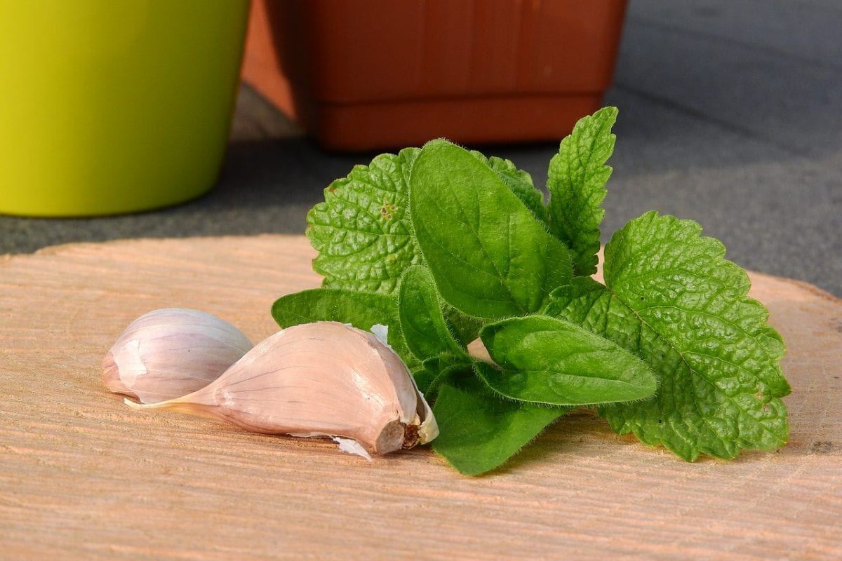 marjoram and garlic on chopping board