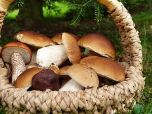 Porcini Mushrooms: What Are They and How to Use Them in Cooking